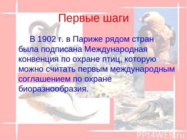 Первые шаги В 1902 г. в Париже рядом стран была подписана Международная конвенция по охране птиц, которую можно считать первым международным соглашением по охране биоразнообразия.