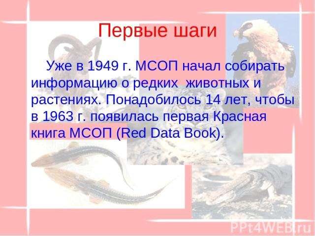 Первые шаги Уже в 1949 г. МСОП начал собирать информацию о редких животных и растениях. Понадобилось 14 лет, чтобы в 1963 г. появилась первая Красная книга МСОП (Red Data Book).