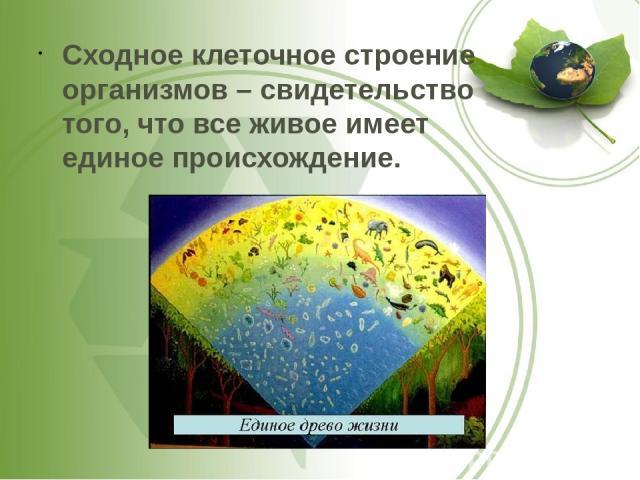 Сходное клеточное строение организмов – свидетельство того, что все живое имеет единое происхождение.