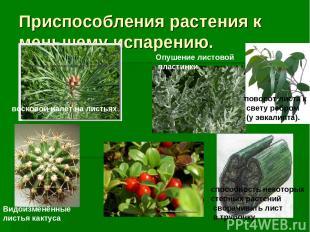 Приспособления растения к меньшему испарению. Видоизменённые листья кактуса пово