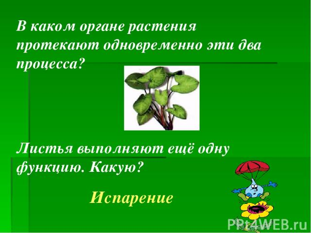 В каком органе растения протекают одновременно эти два процесса? Листья выполняют ещё одну функцию. Какую? Испарение