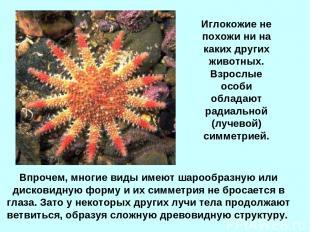 Впрочем, многие виды имеют шарообразную или дисковидную форму и их симметрия не