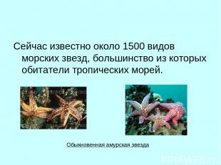 Сейчас известно около 1500 видов морских звезд, большинство из которых обитатели