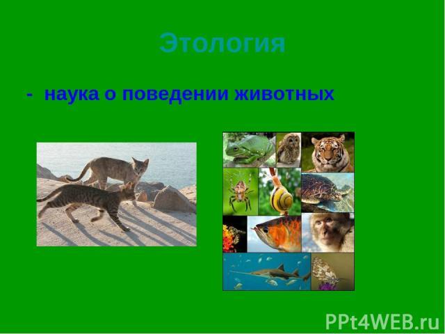 Этология - наука о поведении животных