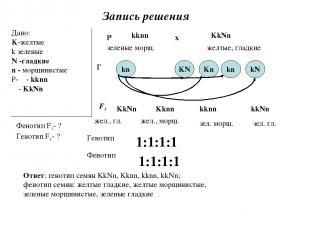 Запись решения Дано: K-желтые k зеленые N -гладкие n - морщинистые Р- ♀- kknn ♂-