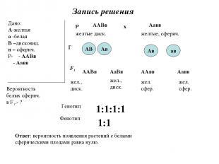 Запись решения Дано: А-желтая а -белая В –дисковид. n – сферич. Р- ♀- ААВв ♂- Аа