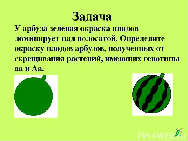 У арбуза зеленая окраска плодов доминирует над полосатой. Определите окраску плодов арбузов, полученных от скрещивания растений, имеющих генотипы аа и Аа. Аа аа Задача