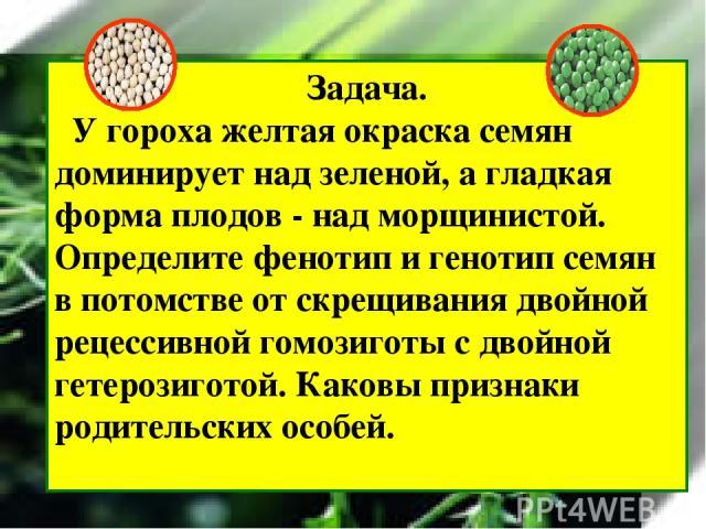 Задача. У гороха желтая окраска семян доминирует над зеленой, а гладкая форма плодов - над морщинистой. Определите фенотип и генотип семян в потомстве от скрещивания двойной рецессивной гомозиготы с двойной гетерозиготой. Каковы признаки родительски…