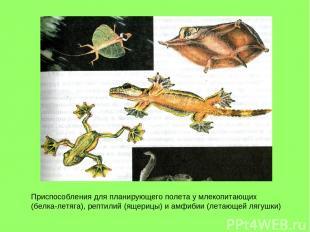 Приспособления для планирующего полета у млекопитающих (белка-летяга), рептилий