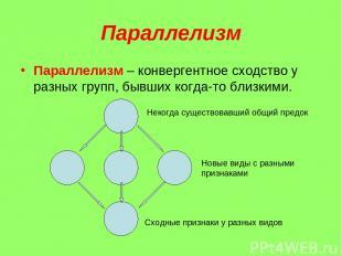 Параллелизм Параллелизм – конвергентное сходство у разных групп, бывших когда-то