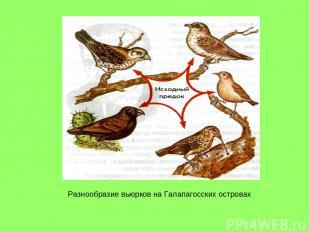 Разнообразие вьюрков на Галапагосских островах