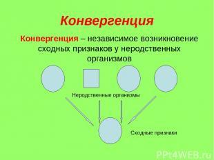 Конвергенция Конвергенция – независимое возникновение сходных признаков у неродс