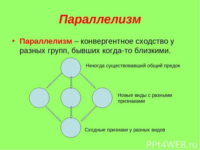 Параллелизм Параллелизм – конвергентное сходство у разных групп, бывших когда-то близкими. Некогда существовавший общий предок Новые виды с разными признаками Сходные признаки у разных видов