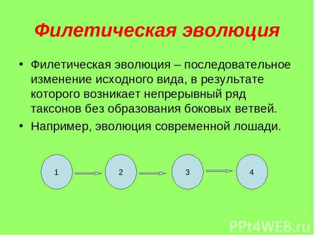 Филетическая эволюция Филетическая эволюция – последовательное изменение исходного вида, в результате которого возникает непрерывный ряд таксонов без образования боковых ветвей. Например, эволюция современной лошади. 1 2 3 4