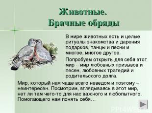 Животные. Брачные обряды В мире животных есть и целые ритуалы знакомства и дарен