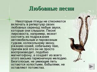 Любовные песни Некоторые птицы не стесняются включать в репертуар своих любовных