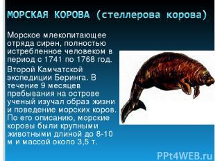 Морское млекопитающее отряда сирен, полностью истребленное человеком в период с