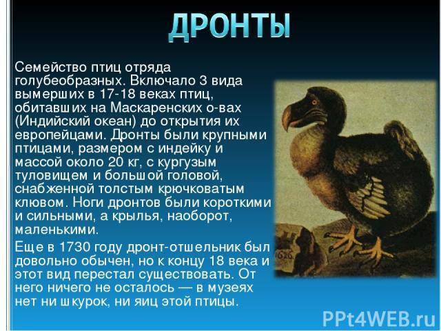 Семейство птиц отряда голубеобразных. Включало 3 вида вымерших в 17-18 веках птиц, обитавших на Маскаренских о-вах (Индийский океан) до открытия их европейцами. Дронты были крупными птицами, размером с индейку и массой около 20 кг, с кургузым тулови…
