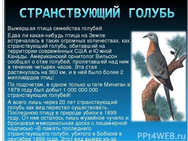 Вымершая птица семейства голубей. Едва ли какая-нибудь птица на Земле встречалась в таких огромных количествах, как странствующий голубь, обитавший на территории современных США и Южной Канады. Американский орнитолог Вильсон сообщал о стае голубей, …