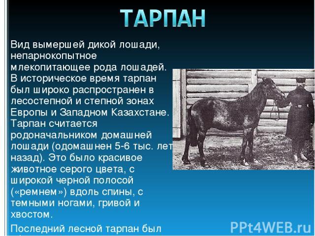 Вид вымершей дикой лошади, непарнокопытное млекопитающее рода лошадей. В историческое время тарпан был широко распространен в лесостепной и степной зонах Европы и Западном Казахстане. Тарпан считается родоначальником домашней лошади (одомашнен 5-6 т…