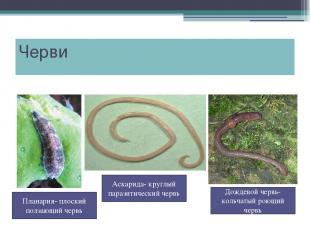 Черви Дождевой червь- кольчатый роющий червь Планария- плоский ползающий червь А