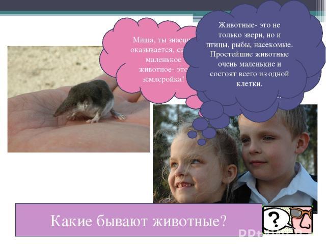 Миша, ты знаешь, оказывается, самое маленькое животное- это землеройка! Ты, наверное, невнимательно читала. Землеройка- самый маленький зверёк, млекопитающее. Животные- это не только звери, но и птицы, рыбы, насекомые. Простейшие животные очень мале…