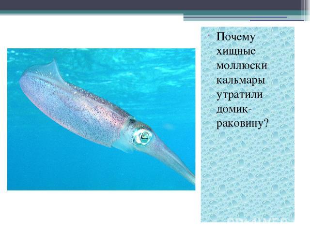 Почему хищные моллюски кальмары утратили домик- раковину?