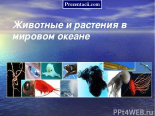 Животные и растения в мировом океане Prezentacii.com