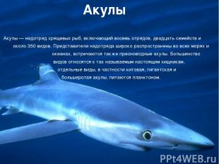 Акулы Акулы — надотряд хрящевых рыб, включающий восемь отрядов, двадцать семейст