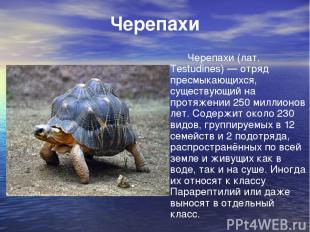 Черепахи Черепахи (лат. Testudines) — отряд пресмыкающихся, существующий на прот