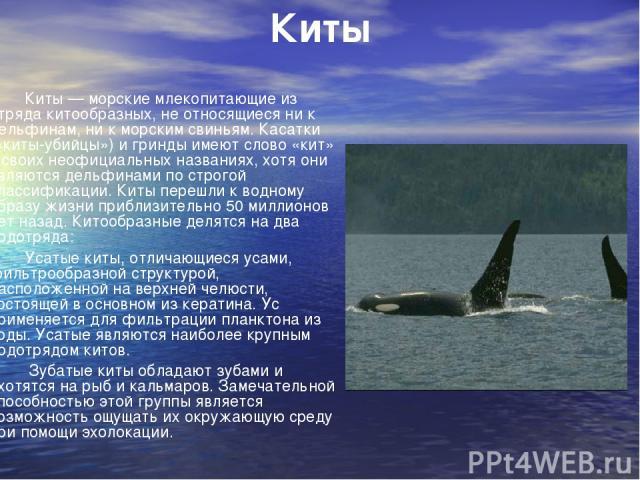 Киты Киты — морские млекопитающие из отряда китообразных, не относящиеся ни к дельфинам, ни к морским свиньям. Касатки («киты-убийцы») и гринды имеют слово «кит» в своих неофициальных названиях, хотя они являются дельфинами по строгой классификации.…