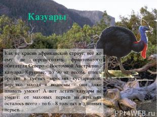 Казуары Как не красив африканский страус, всё же ему не перещеголять франтоватог