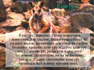 Кенгуру Кенгуру, наверно, самое известное животное Австралии. Всего существует 4