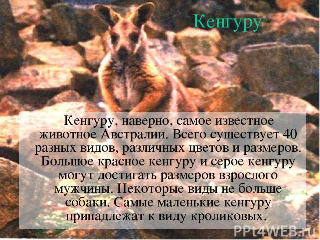 Кенгуру Кенгуру, наверно, самое известное животное Австралии. Всего существует 40 разных видов, различных цветов и размеров. Большое красное кенгуру и серое кенгуру могут достигать размеров взрослого мужчины. Некоторые виды не больше собаки. Самые м…