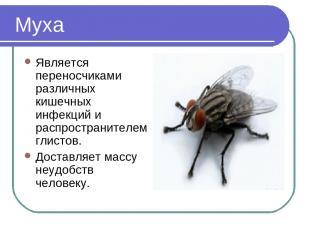 Муха Является переносчиками различных кишечных инфекций и распространителем глис