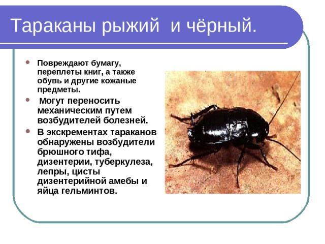 Тараканы рыжий и чёрный. Повреждают бумагу, переплеты книг, а также обувь и другие кожаные предметы. Могут переносить механическим путем возбудителей болезней. В экскрементах тараканов обнаружены возбудители брюшного тифа, дизентерии, туберкулеза, л…
