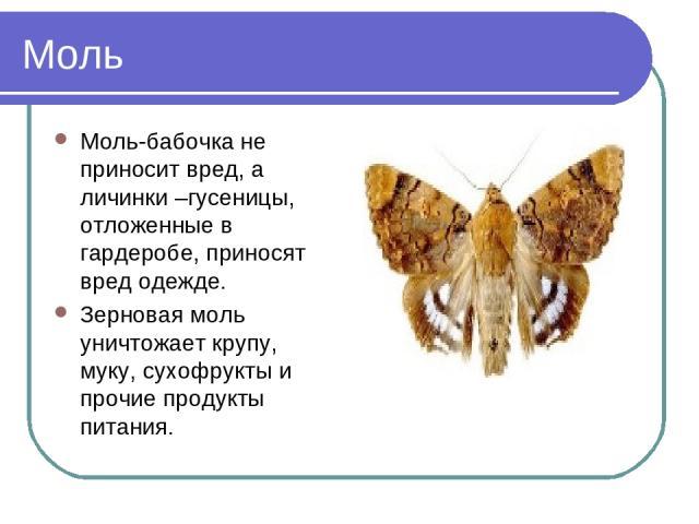 Моль Моль-бабочка не приносит вред, а личинки –гусеницы, отложенные в гардеробе, приносят вред одежде. Зерновая моль уничтожает крупу, муку, сухофрукты и прочие продукты питания.