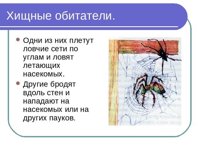 Хищные обитатели. Одни из них плетут ловчие сети по углам и ловят летающих насекомых. Другие бродят вдоль стен и нападают на насекомых или на других пауков.