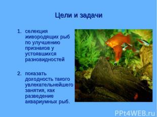 Цели и задачи селекция живородящих рыб по улучшению признаков у устоявшихся разн