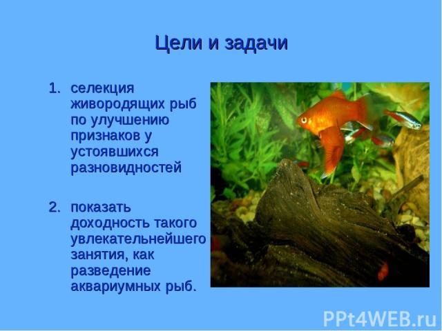Цели и задачи селекция живородящих рыб по улучшению признаков у устоявшихся разновидностей показать доходность такого увлекательнейшего занятия, как разведение аквариумных рыб.