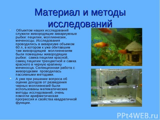 Материал и методы исследований Объектом наших исследований служили живородящие аквариумные рыбки: пецилии, моллиенезии, меченосцы. Исследования проводились в аквариуме объемом 60 л, в котором к уже обитавшим там живородящим моллиенезиям были помещен…