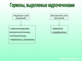 Наружный слой (корковый) Внутренний слой (мозговой) кортикостероиды: минералокор