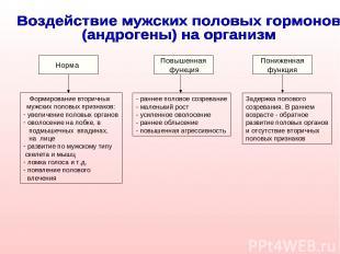 Норма Повышенная функция Пониженная функция Формирование вторичных мужских полов