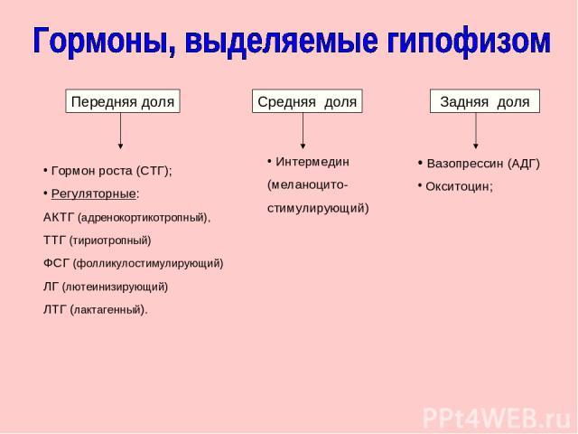 Передняя доля Гормон роста (СТГ); Регуляторные: АКТГ (адренокортикотропный), ТТГ (тириотропный) ФСГ (фолликулостимулирующий) ЛГ (лютеинизирующий) ЛТГ (лактагенный). Задняя доля Вазопрессин (АДГ) Окситоцин; Средняя доля Интермедин (меланоцито- стимул…