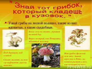 Узнай грибы на лесной полянке, какие из них ядовитые, а какие съедобные. Под дер