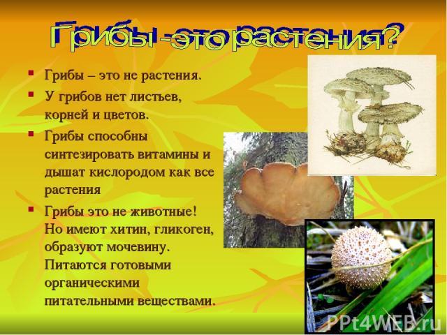 Грибы – это не растения. У грибов нет листьев, корней и цветов. Грибы способны синтезировать витамины и дышат кислородом как все растения Грибы это не животные! Но имеют хитин, гликоген, образуют мочевину. Питаются готовыми органическими питательным…