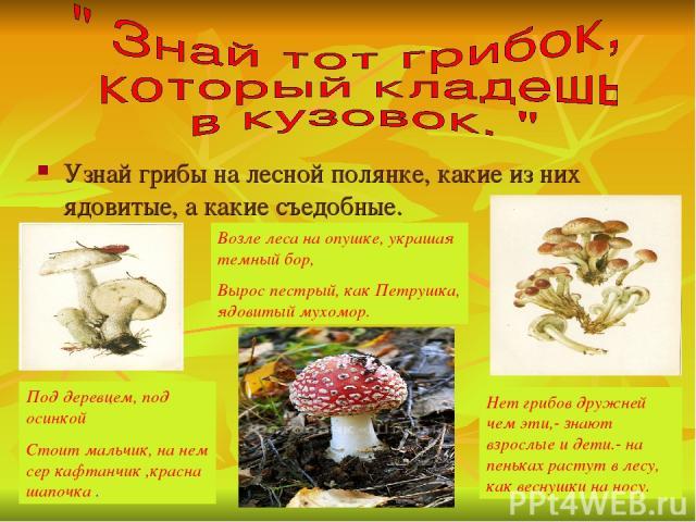 Узнай грибы на лесной полянке, какие из них ядовитые, а какие съедобные. Под деревцем, под осинкой Стоит мальчик, на нем сер кафтанчик ,красна шапочка . Нет грибов дружней чем эти,- знают взрослые и дети.- на пеньках растут в лесу, как веснушки на н…
