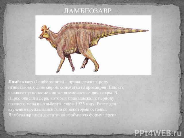 Ламбеозавр(Lambeosaurus) – принадлежит к роду птицетазовых динозавров, семейства гадрозавров. Еще его называют утконосые или же шлемоносные динозавры. В. Паркс описал ящера, который принадлежал к периоду позднего мела из Альберты, еще в 1923 году. …