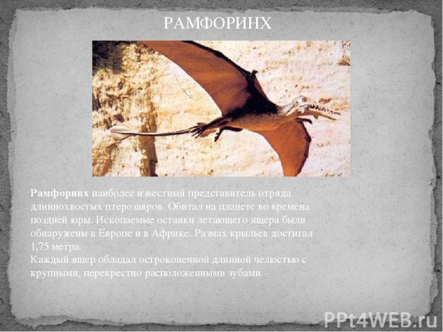 Рамфоринхнаиболее известный представитель отряда длиннохвостых птерозавров. Обитал на планете во времена поздней юры. Ископаемые останки летающего ящера были обнаружены в Европе и в Африке. Размах крыльев достигал 1,75 метра. Каждый ящер обладал о…