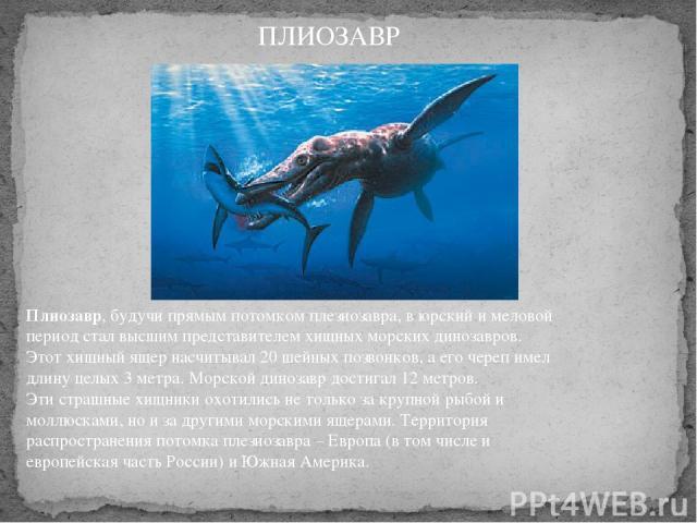 Плиозавр, будучи прямым потомком плезиозавра, в юрский и меловой период стал высшим представителем хищных морских динозавров. Этот хищный ящер насчитывал 20 шейных позвонков, а его череп имел длину целых 3 метра. Морской динозавр достигал 12 метров.…
